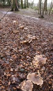 Unidientified Mushrooms